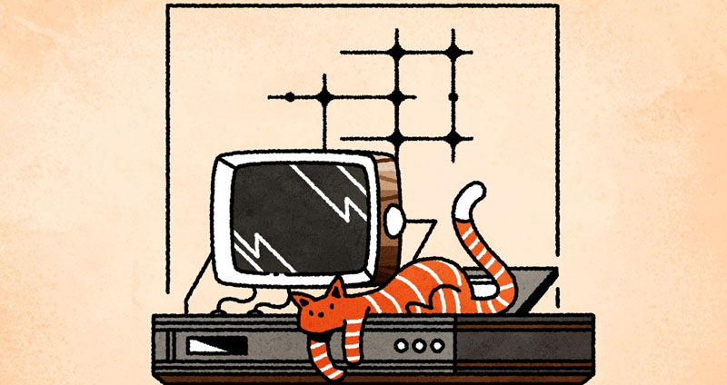 cat and computer